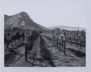 B&W Mountain Vineyard