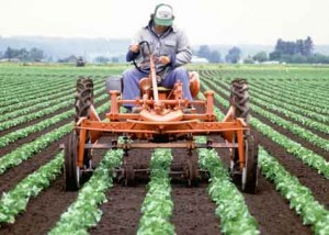 Vegetable-Farm